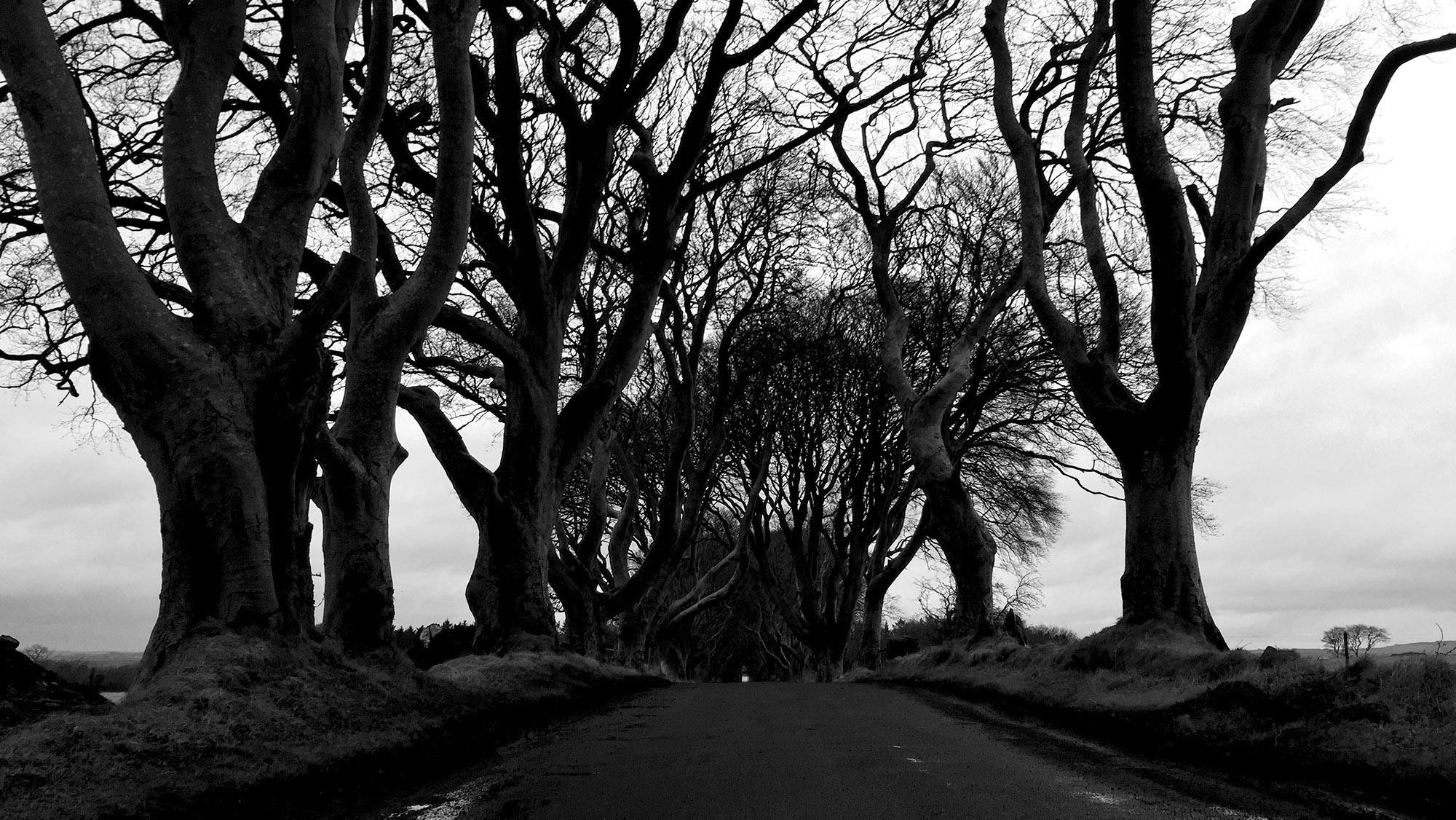 Dark Hedges, Ballymoney, Northern Ireland