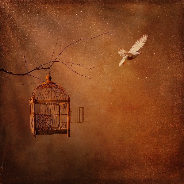 Songbird Silenced, Poetry Book