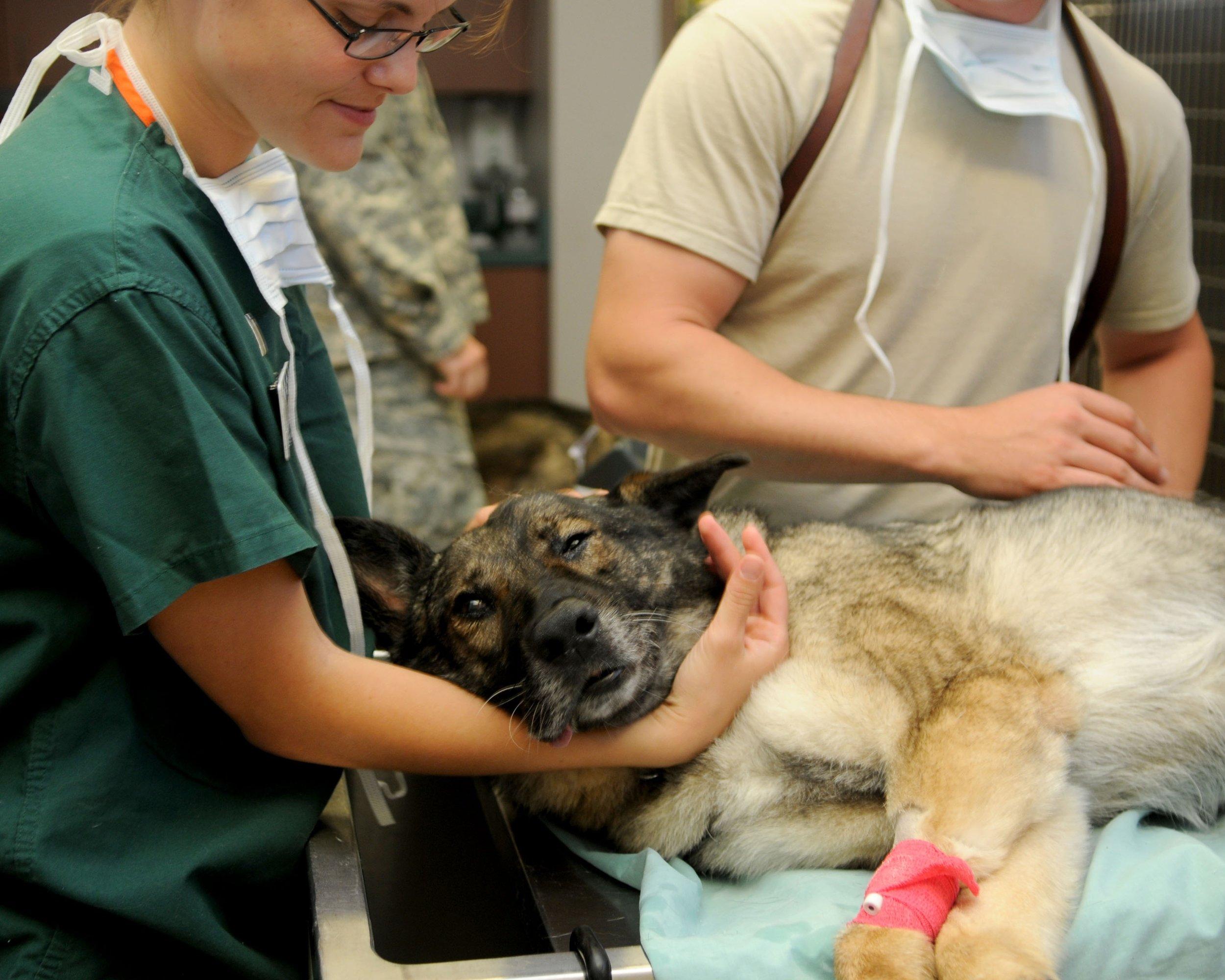 puppy-dog-animal-canine-care-medicine-1137660-pxhere.com.jpg