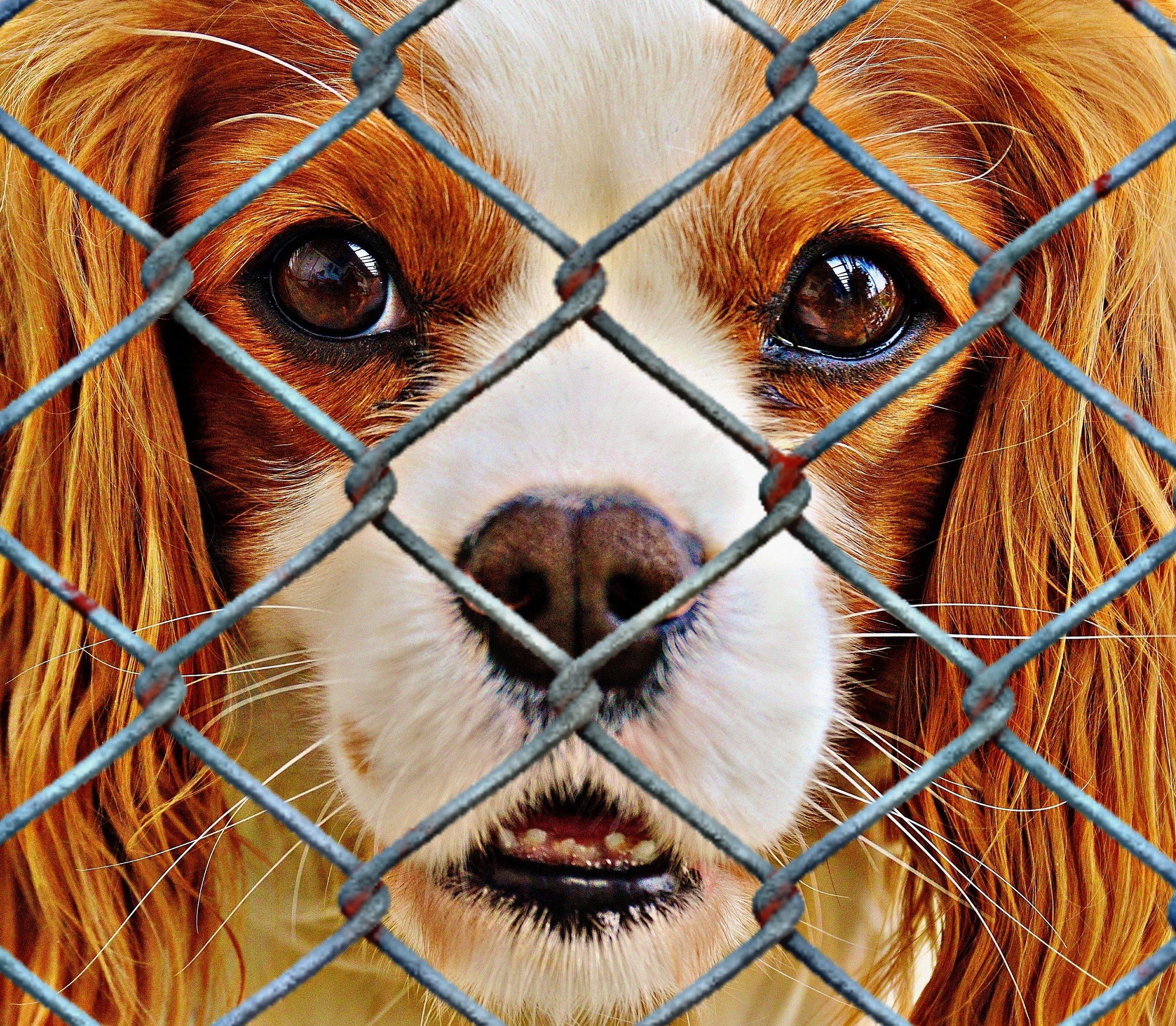 fence-sweet-puppy-dog-cute-mammal-833043-pxhere.com.jpg