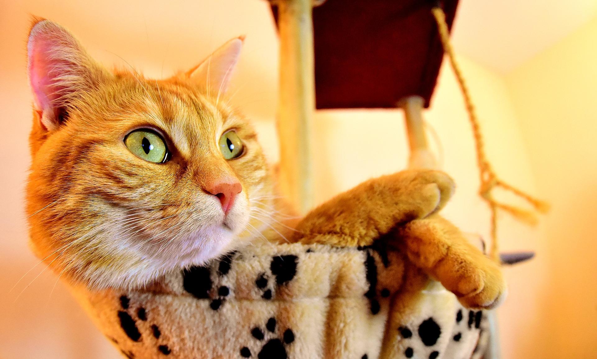 cat-3418484_1920.jpg