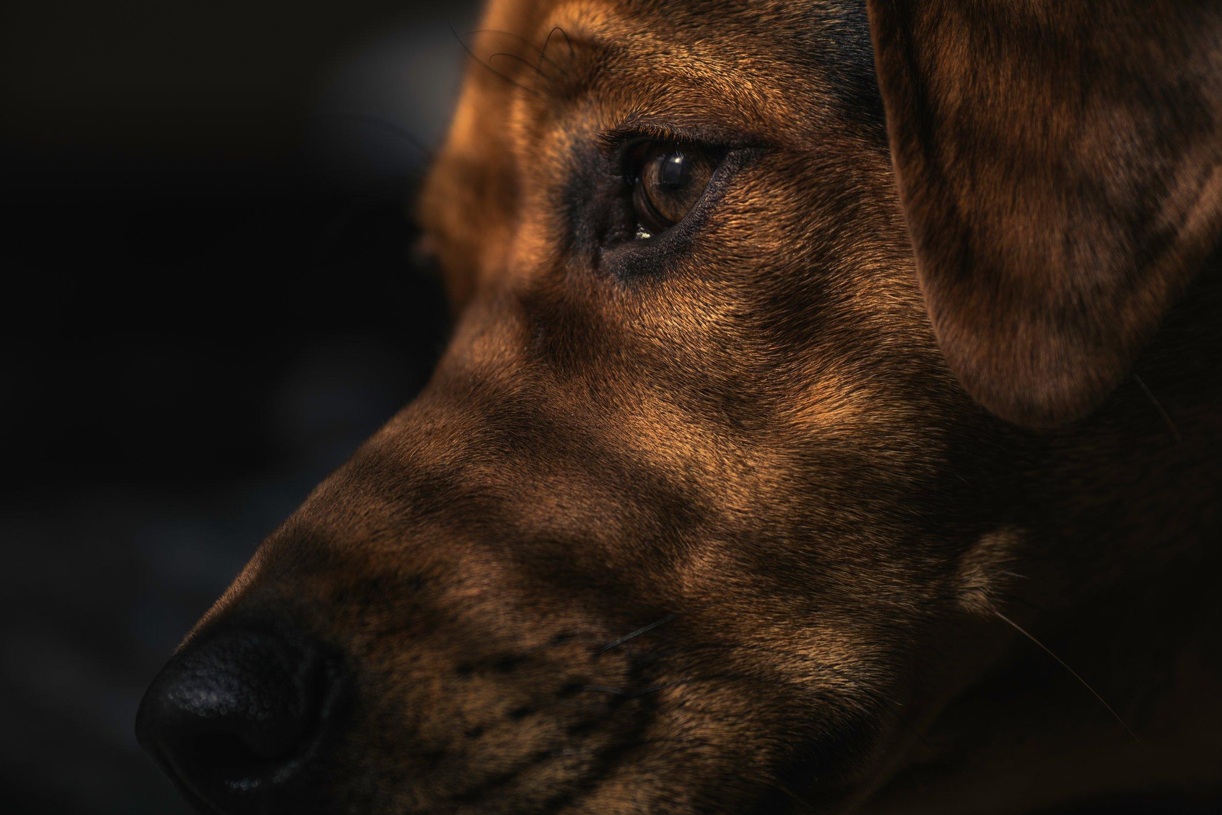 dog-1149188.jpg