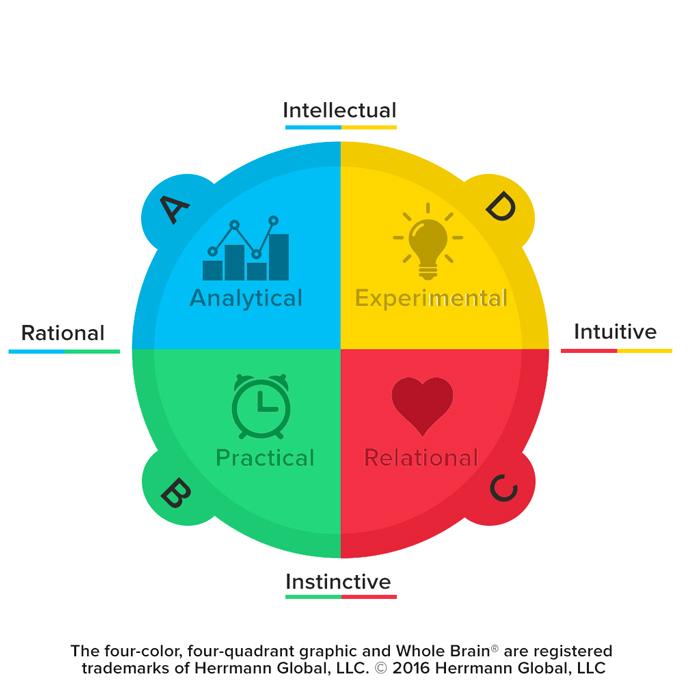 whole-brain-model-2016.jpg