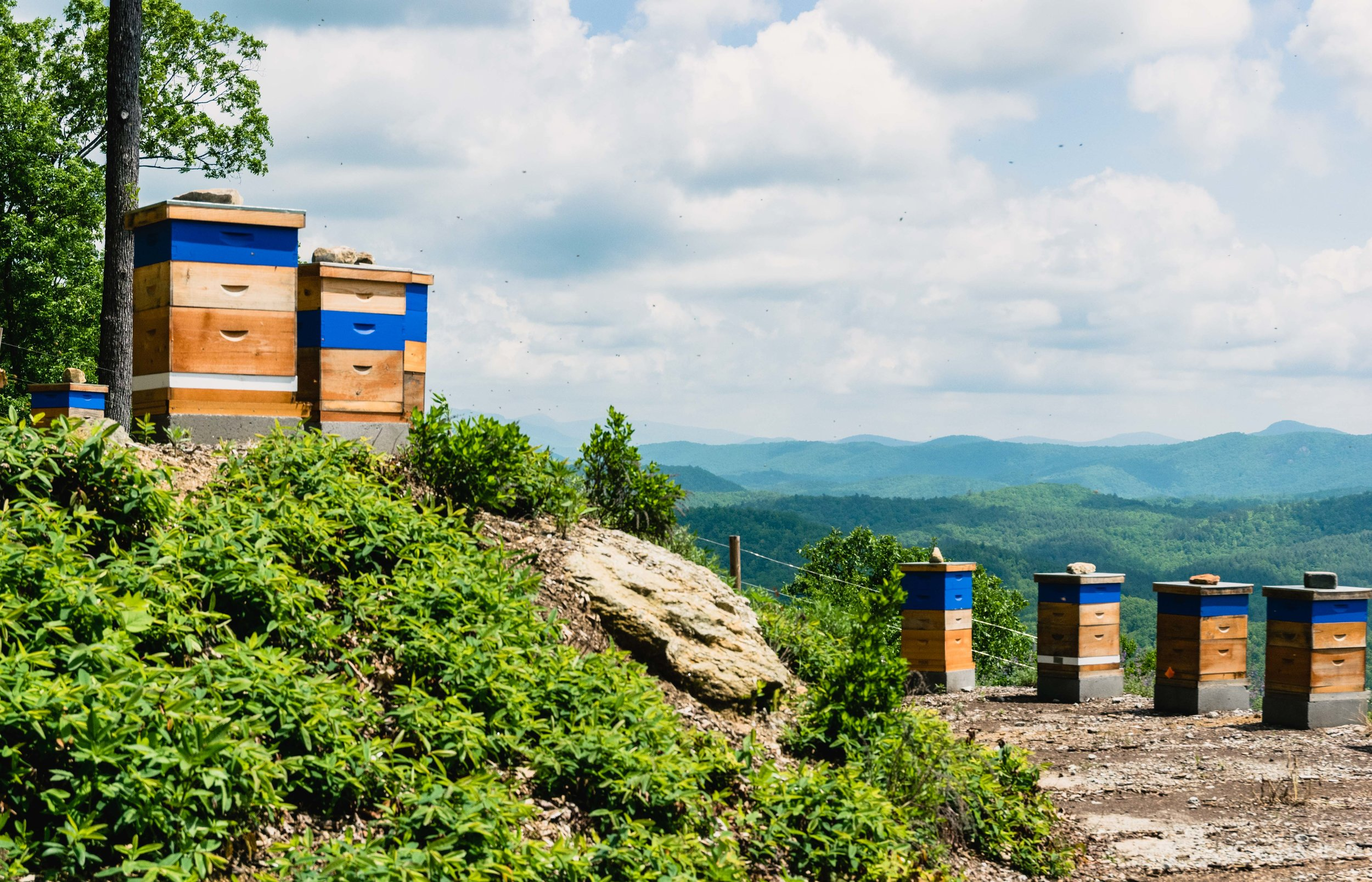 Take a close look to see bees flying all through the air around the hives