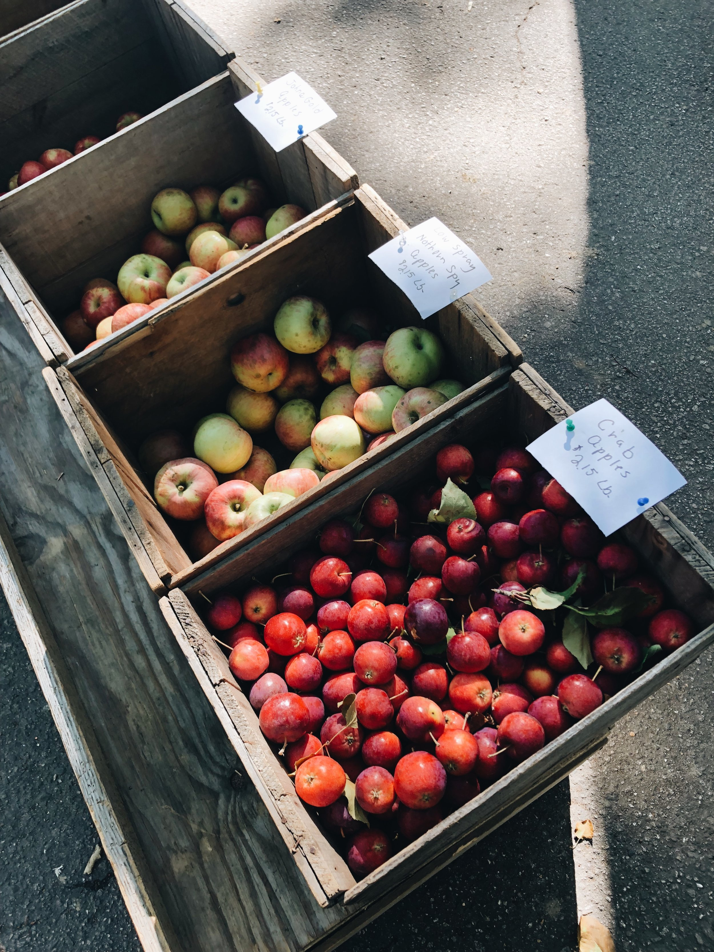 Fresh, local produce at the Deering Oaks Farmers Market