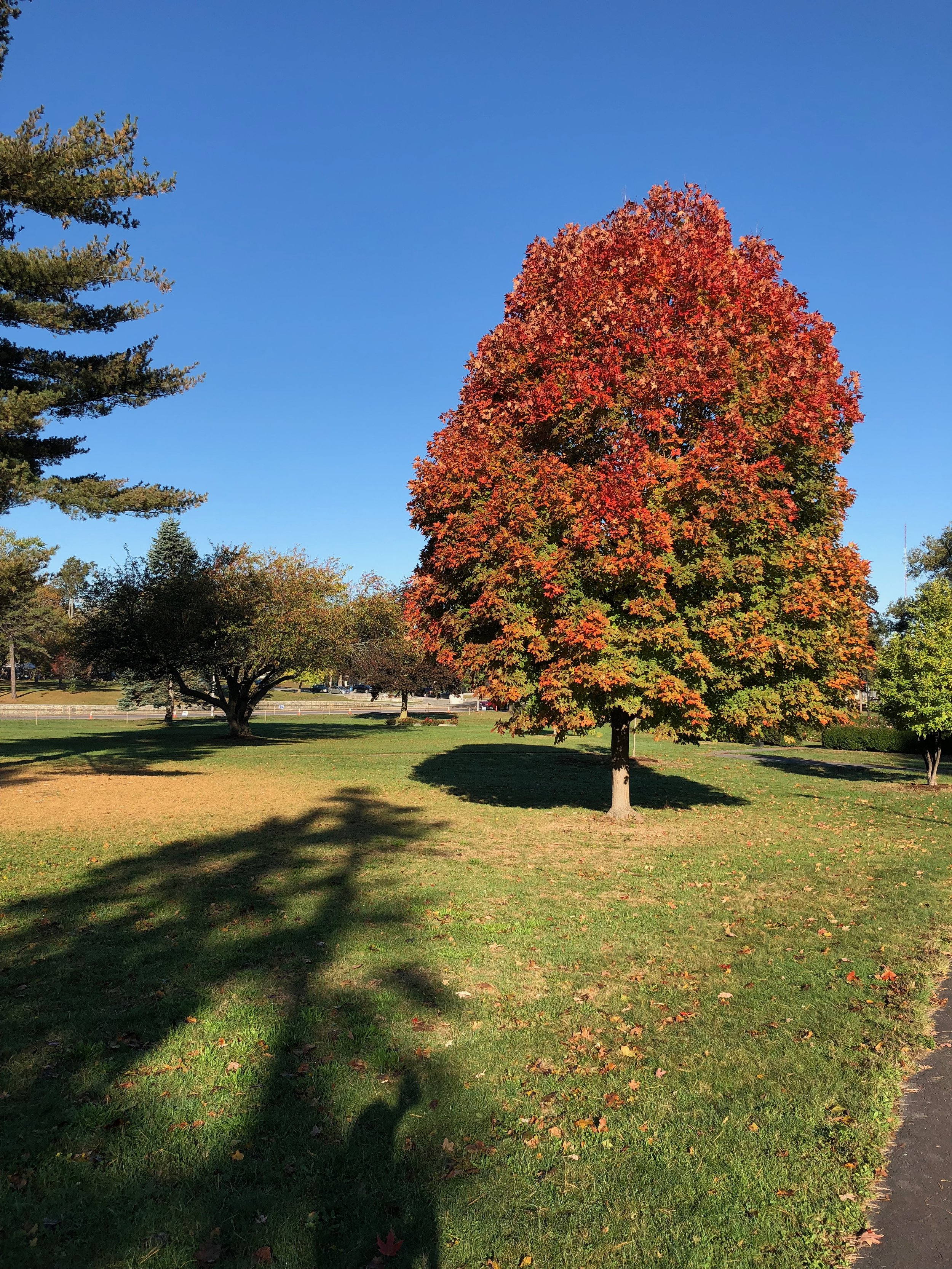 Signs of autumn at Deering Oaks Park