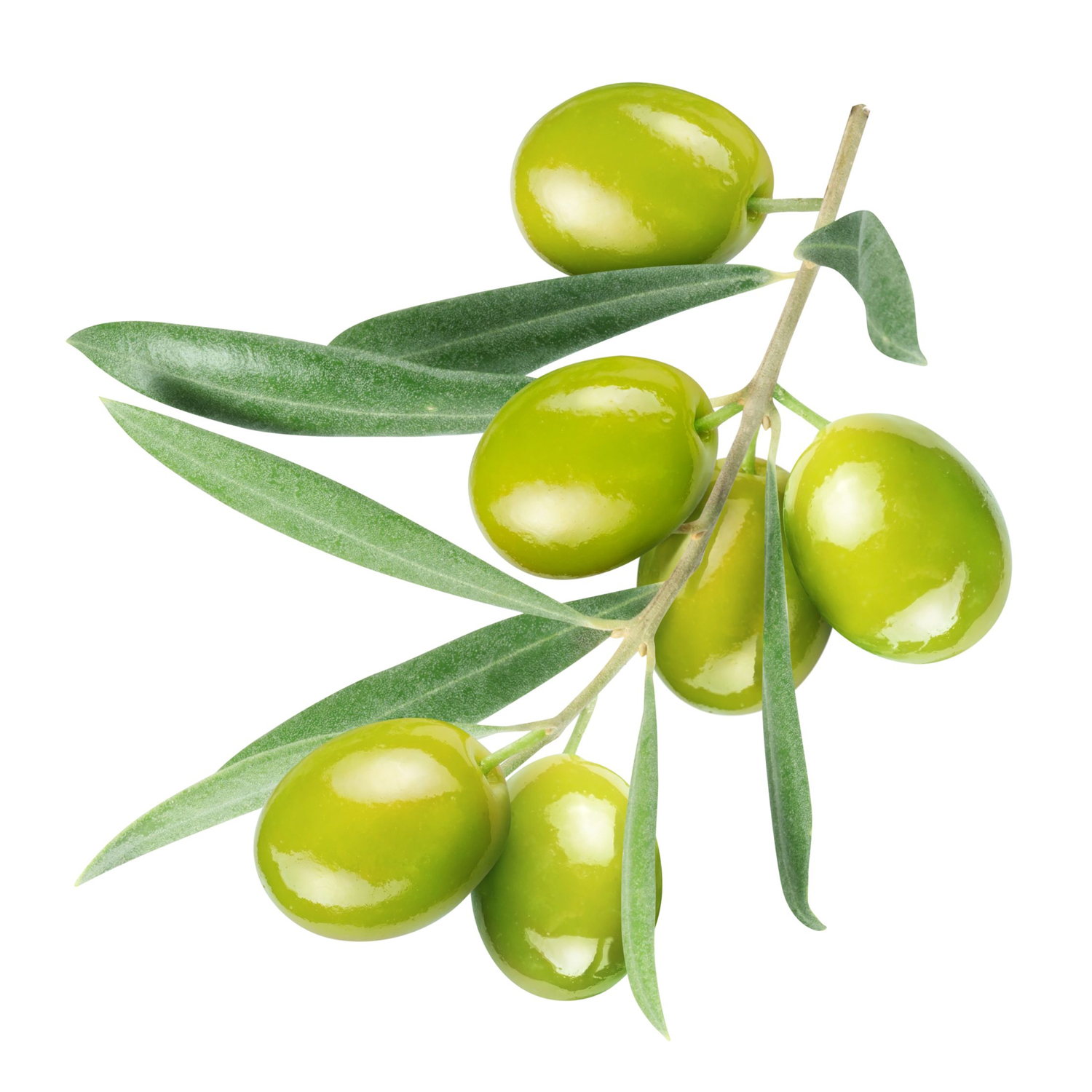ingredient-squalene-olives.jpg