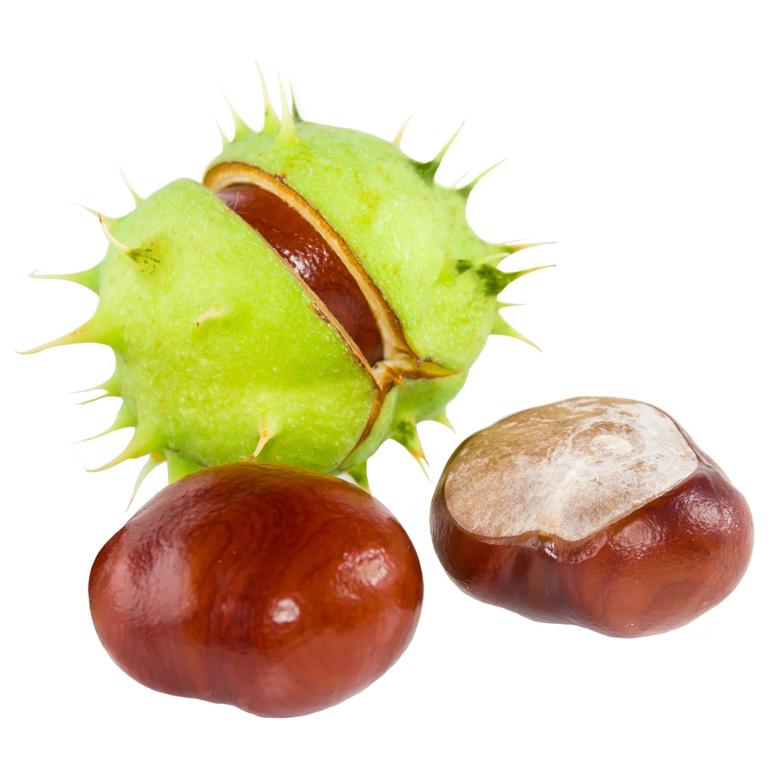 ingredient-horse-chestnut.jpg