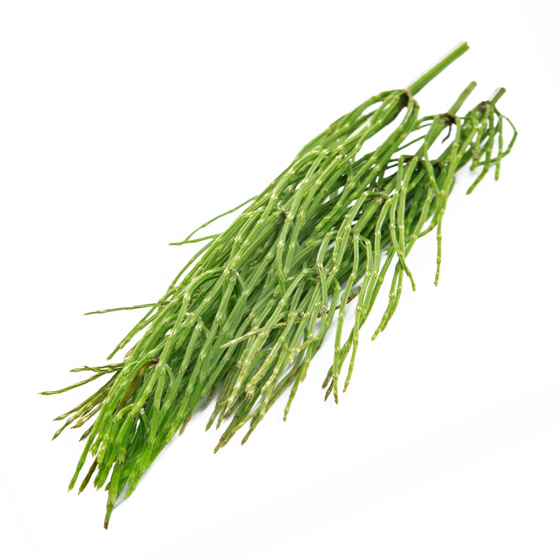 ingredient-horsetail.jpg