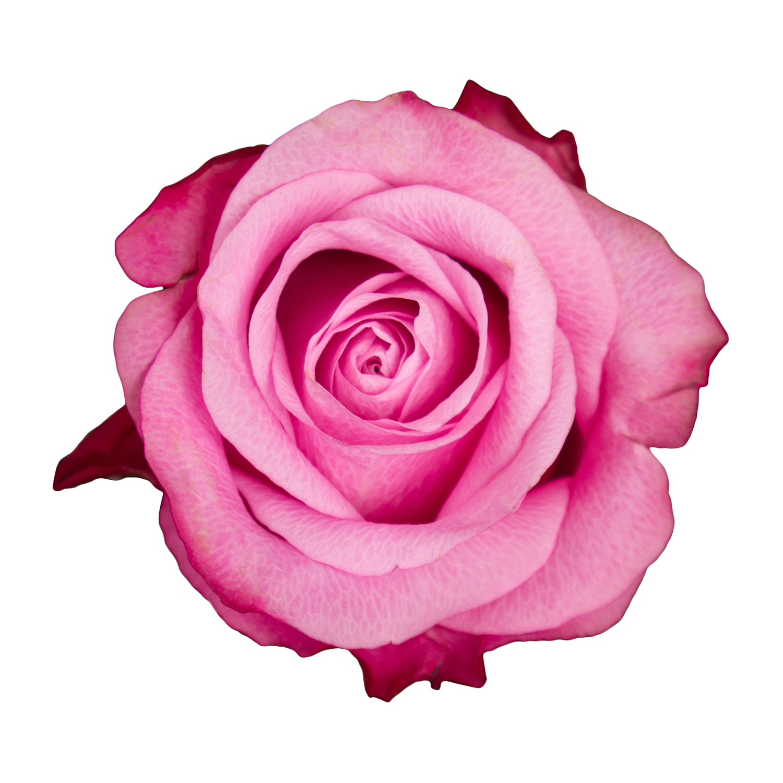 ingredient-rose.jpg
