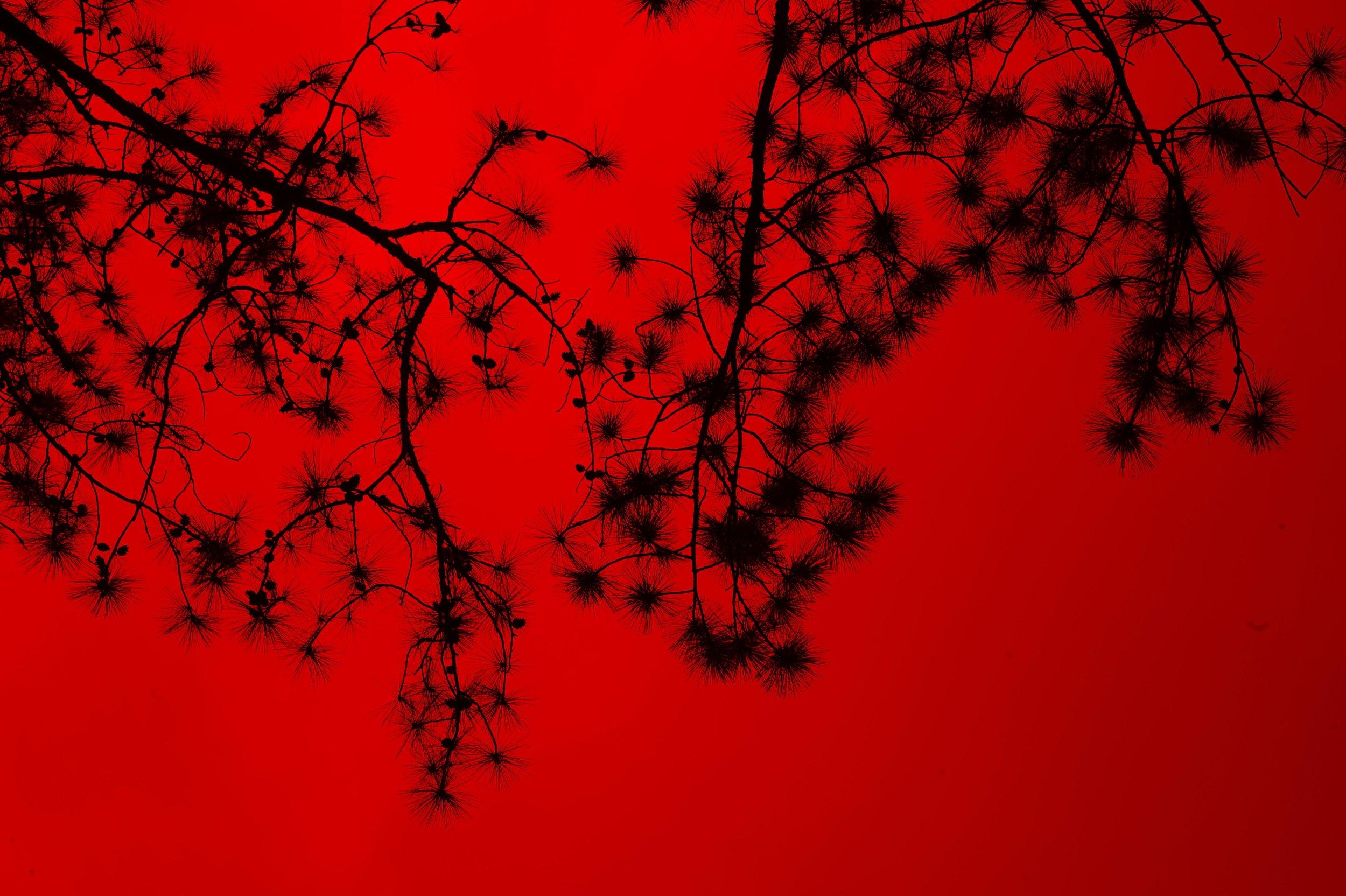 red-network.jpeg