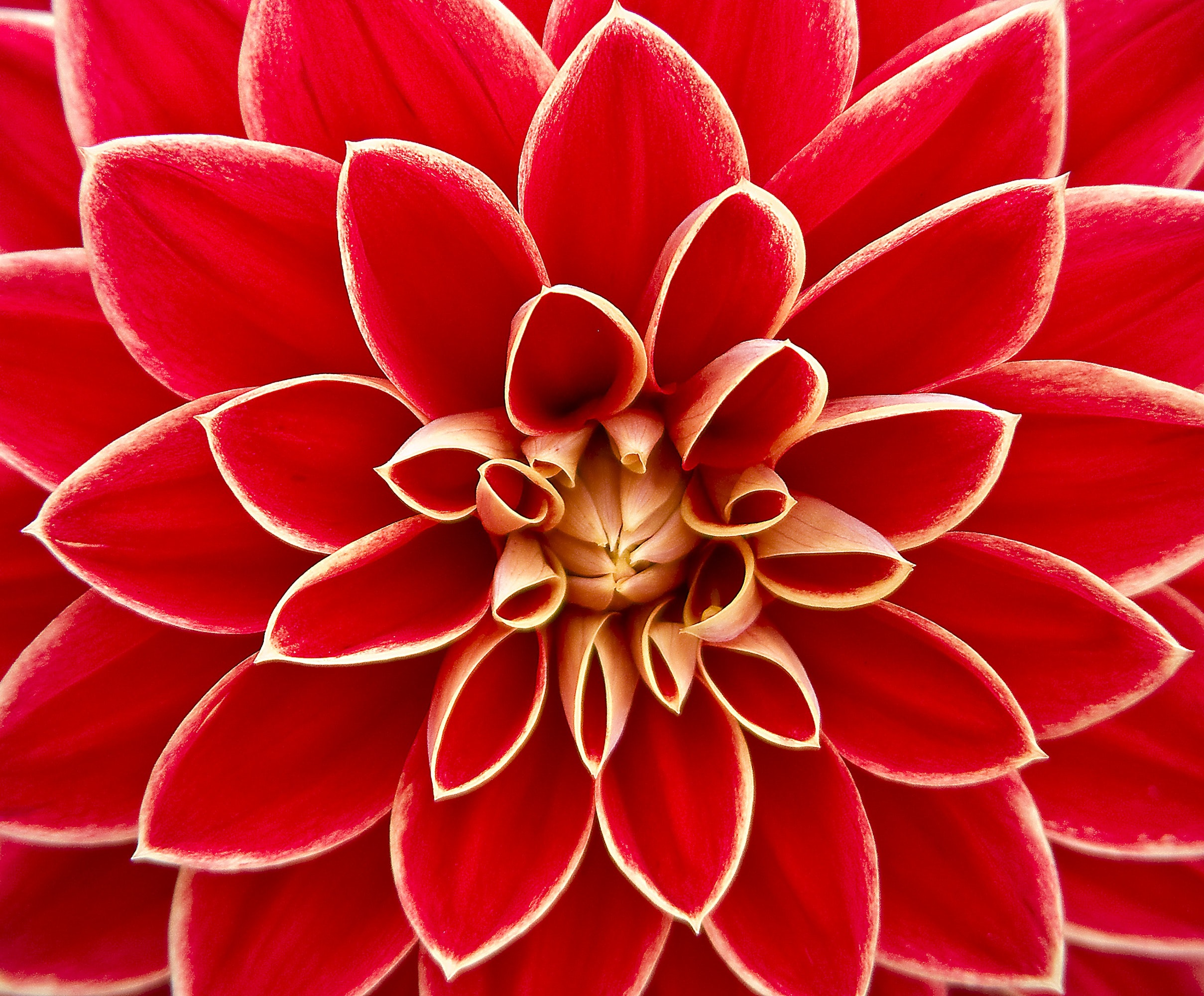 red-flower.jpeg