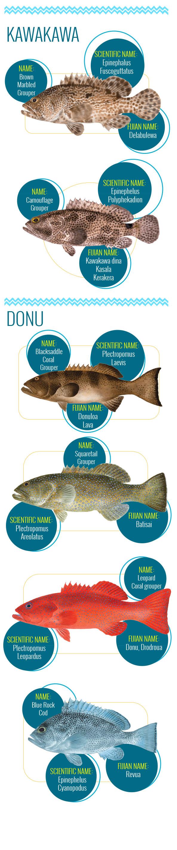 Meet-the-Fish-website.jpg