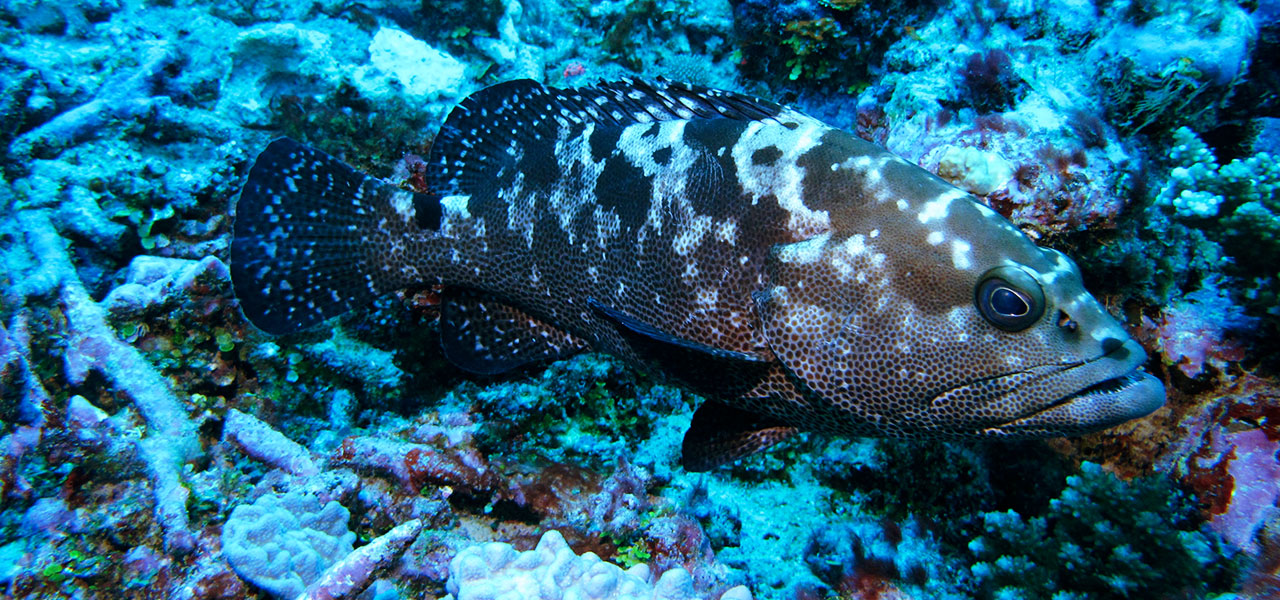 Meet The Fish: The Ones You Should Be Worried About.