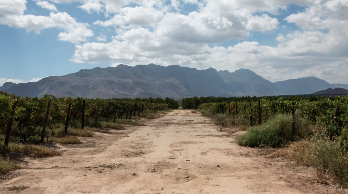 A DEATH IN THE WINELANDS
