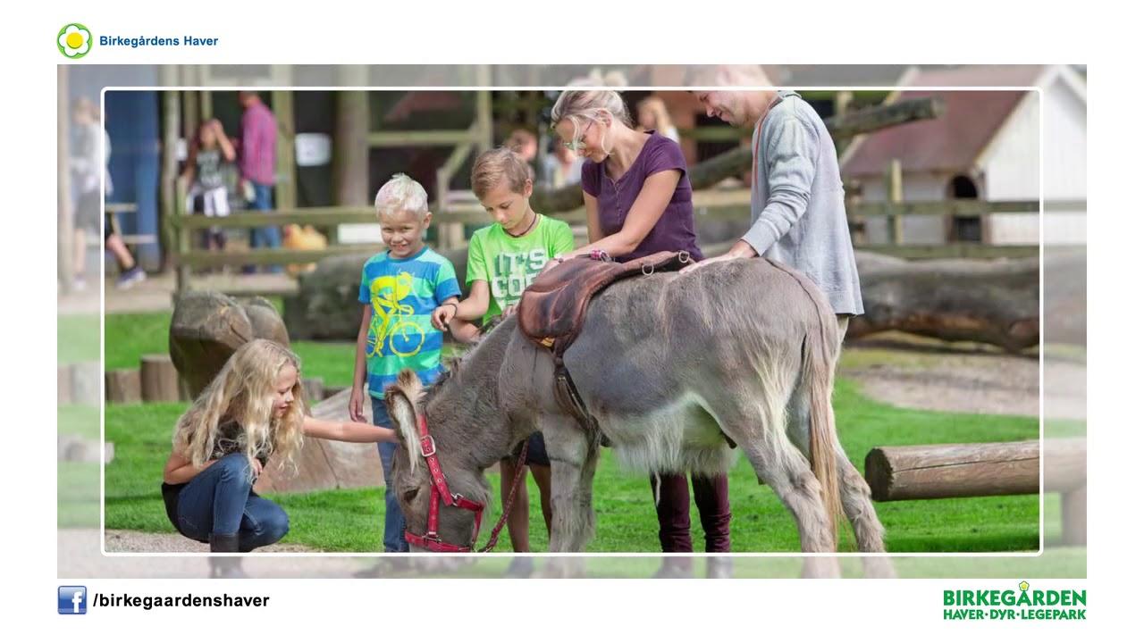 Birkegården - Oplev en hyggelig familie dag i smukke omgivelser, 6 legepladser og blandt dyrene.Pris: 0-1 år: 0kr. 2-12 år: 85kr. Voksne: 95kr. Familiebillet 2 voksne og max 3 børn: 285kr.