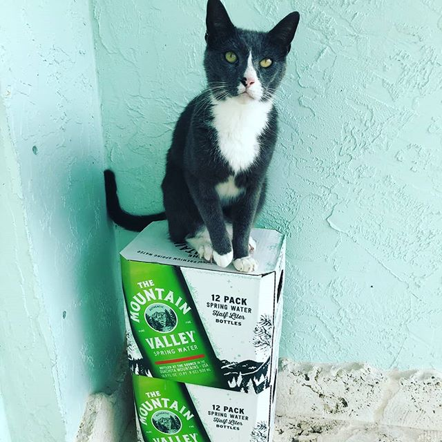Fido sure knows a good thing when he sees it. #dogcat #happycat #wateringlass #mountainvalleywater #westpalmbeach #palmbeach #homedelivery