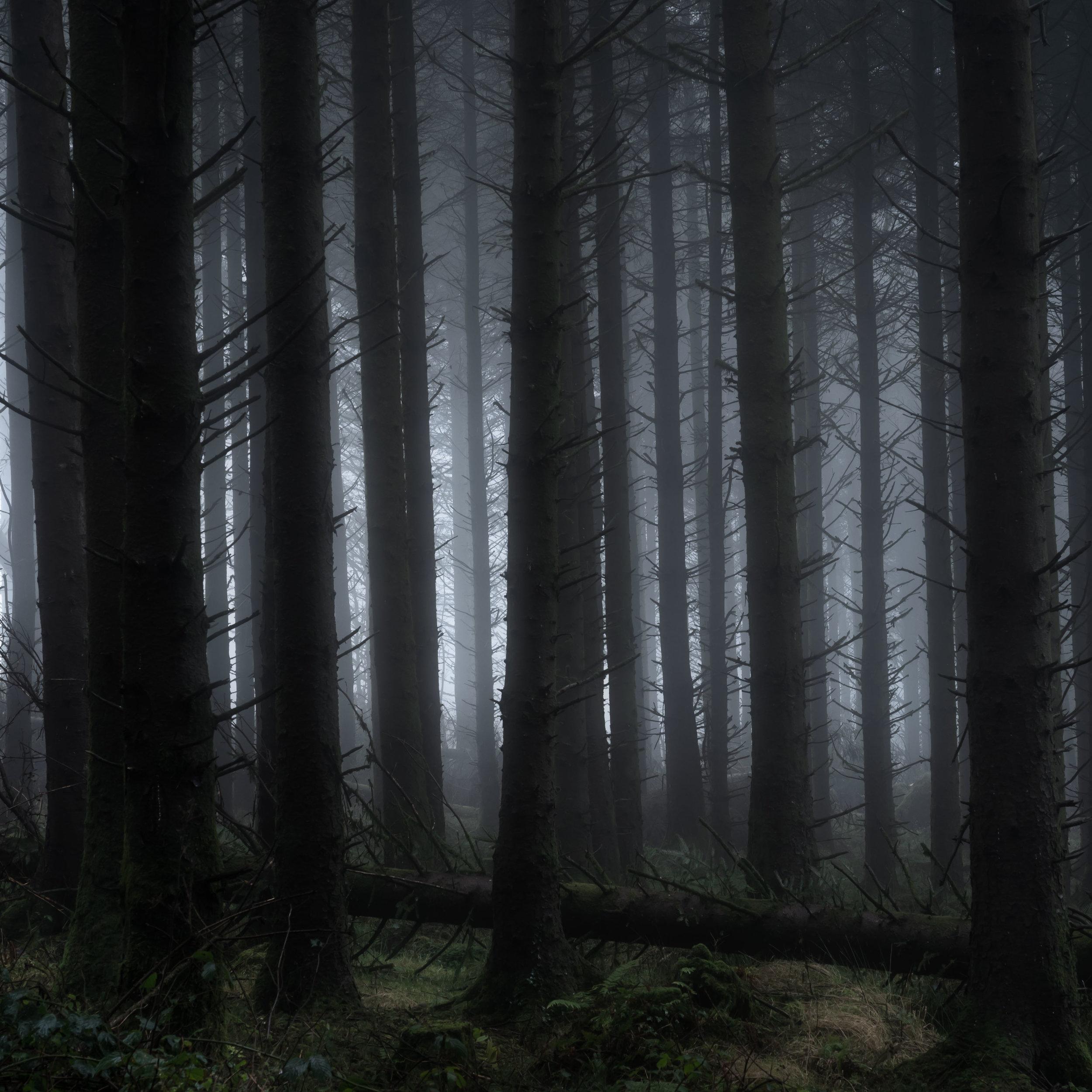 Like a scene from Sleepy Hollow!
