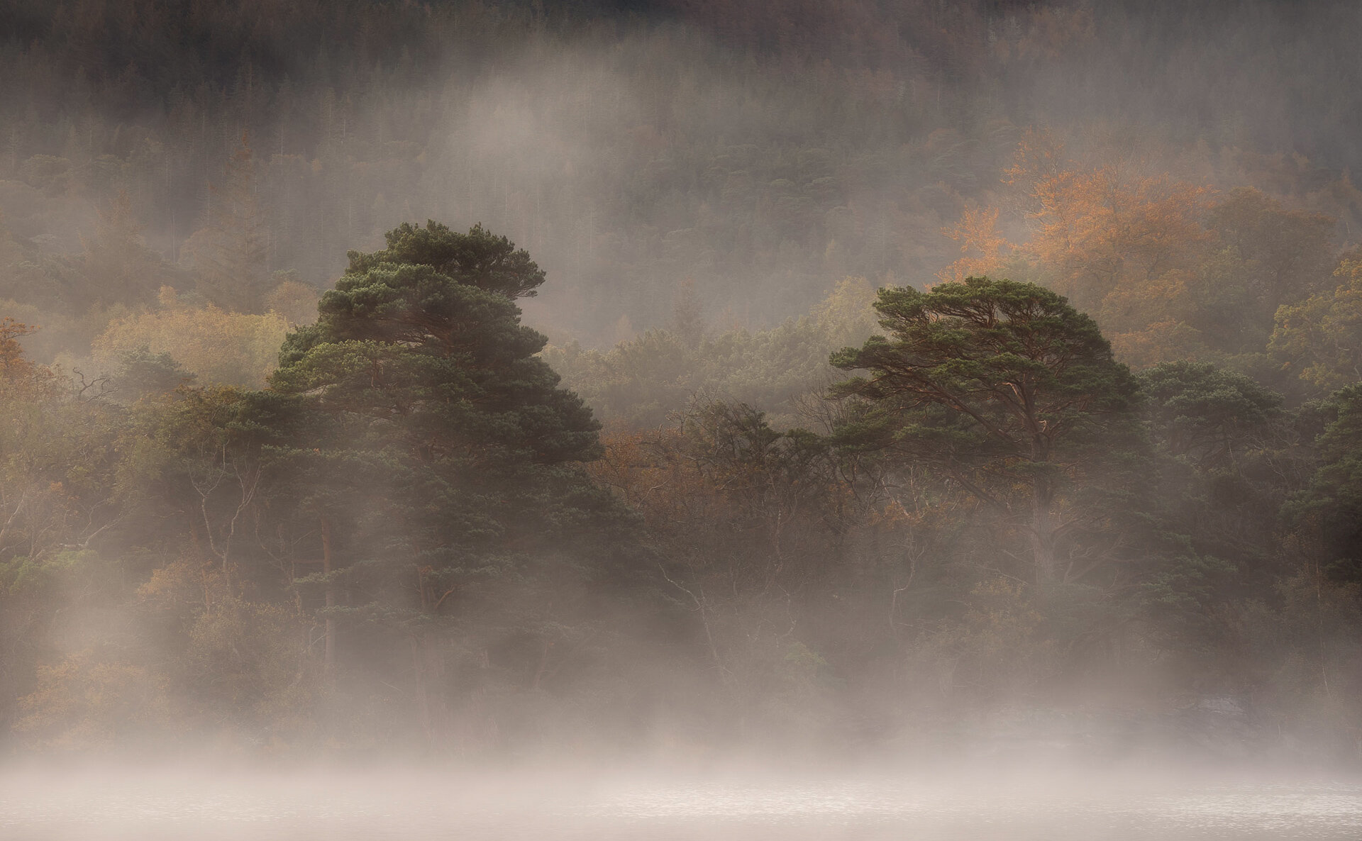 Pine trees rising from the mist- shot at 100mm