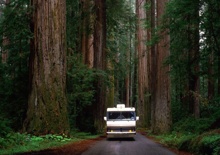 Redwood Highway.jpg