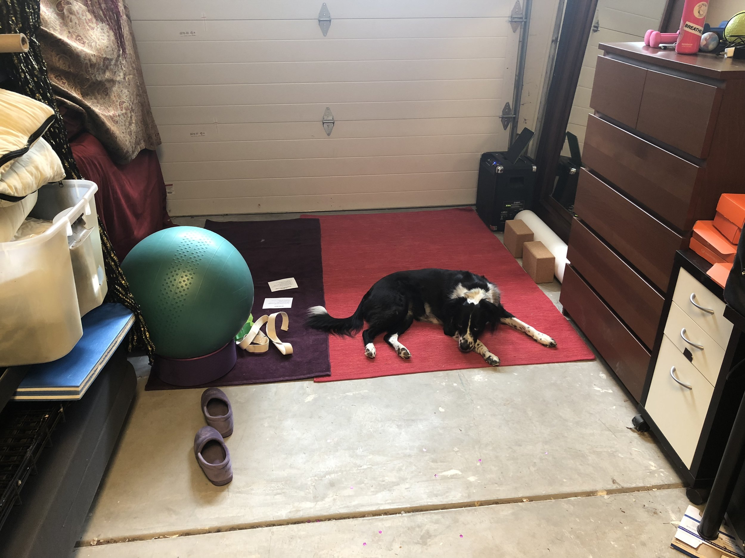 Leila approves of my home gym set up.