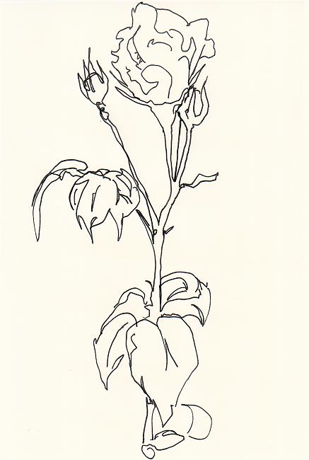 """White Rose Study"""