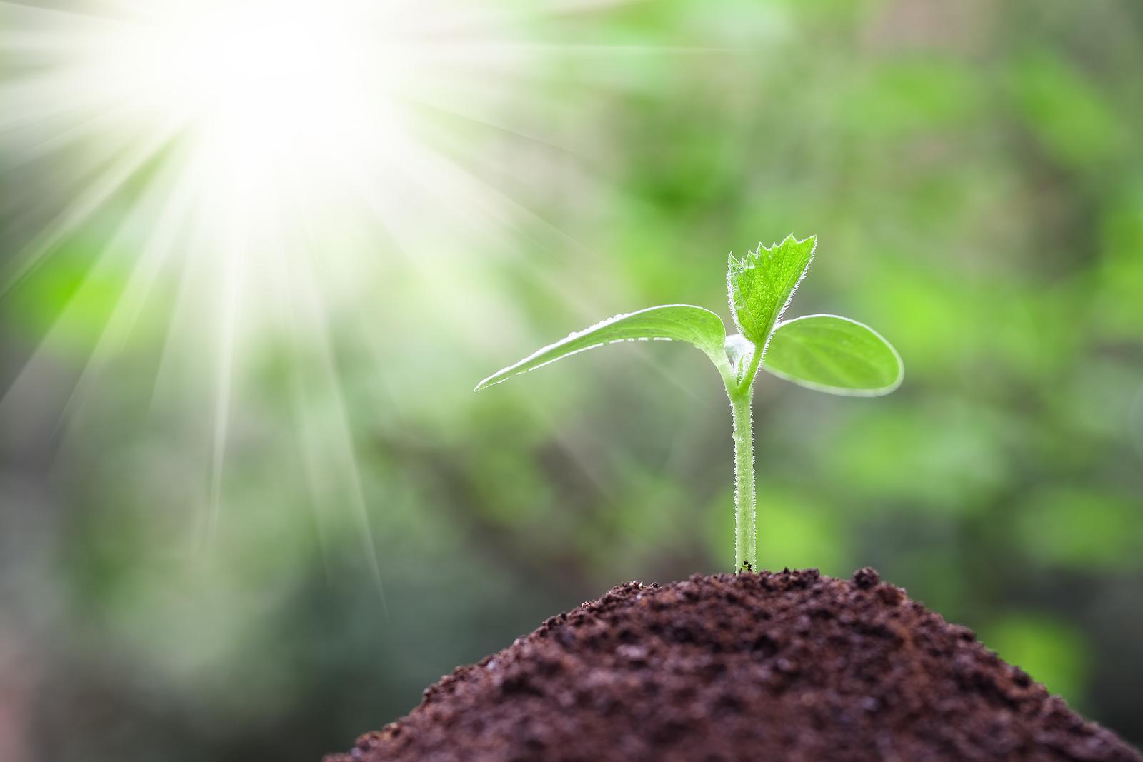 bigstock-Seedling-Closeup-With-Sunshine-64028794.jpg