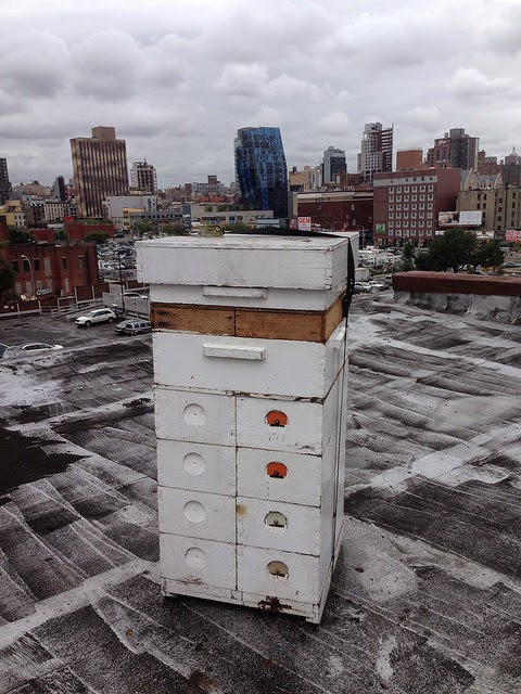A Kerkhoff hive on the roof of St. Mary's Church in the Lower East Side. The hive belongs to Andrew Cote. Cote is the only full-time beekeeper in New York City. He has over 50 hives located in parks, gardens, backyards and rooftops.
