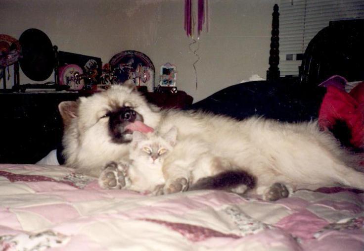 holly_kitty.jpg