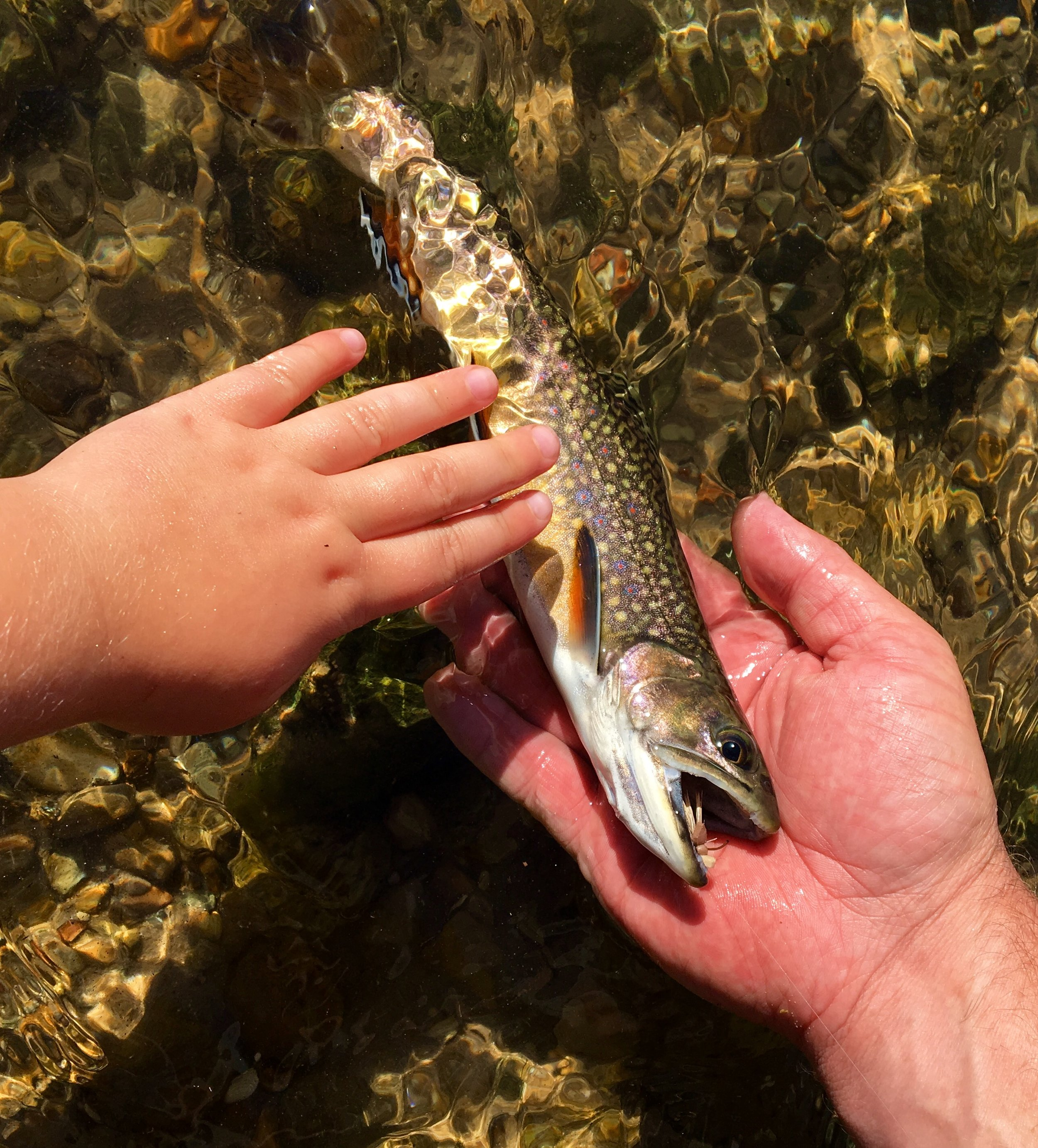 Teaching the next generation about catch and release