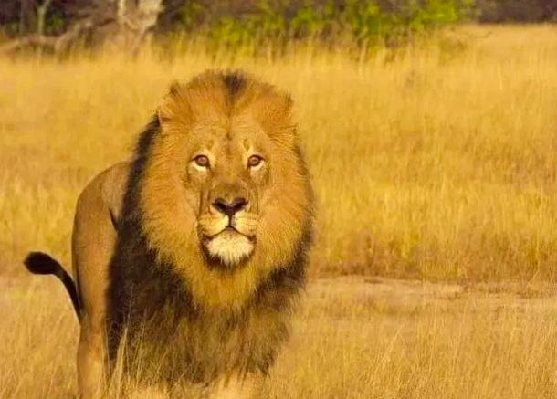 Mopane before his death. Credit: Facebook / The Hide, Zimbabwe Safari Lodge