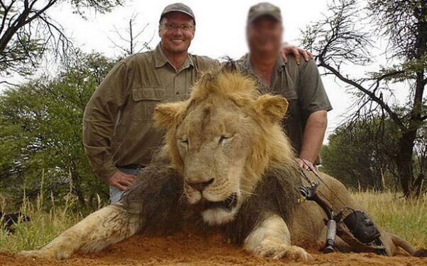 Cecil the lion was killed in a national park in 2015 by US dentist, Walter Palmer