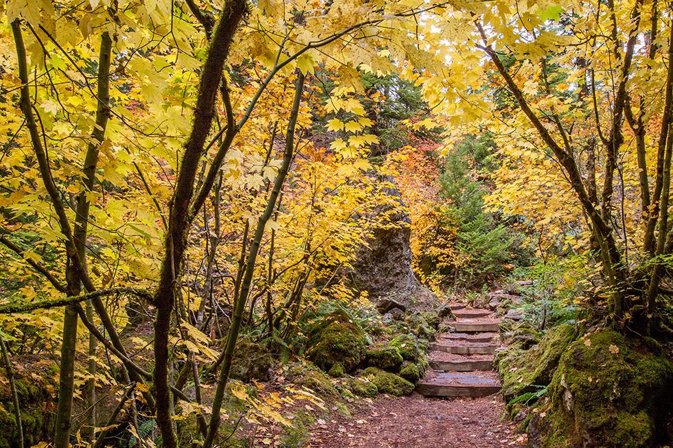 Fall Foliage Photo Workshop