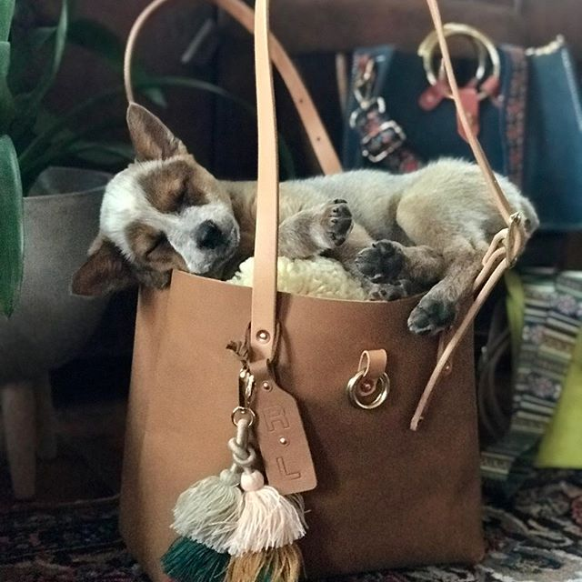 Getting ready for upcoming shows... I had a helper but she had to take a nap! • • • • #rivetleatherworks #puppies #handmade #leathertote #madeintheusa #spring #equineaffaire