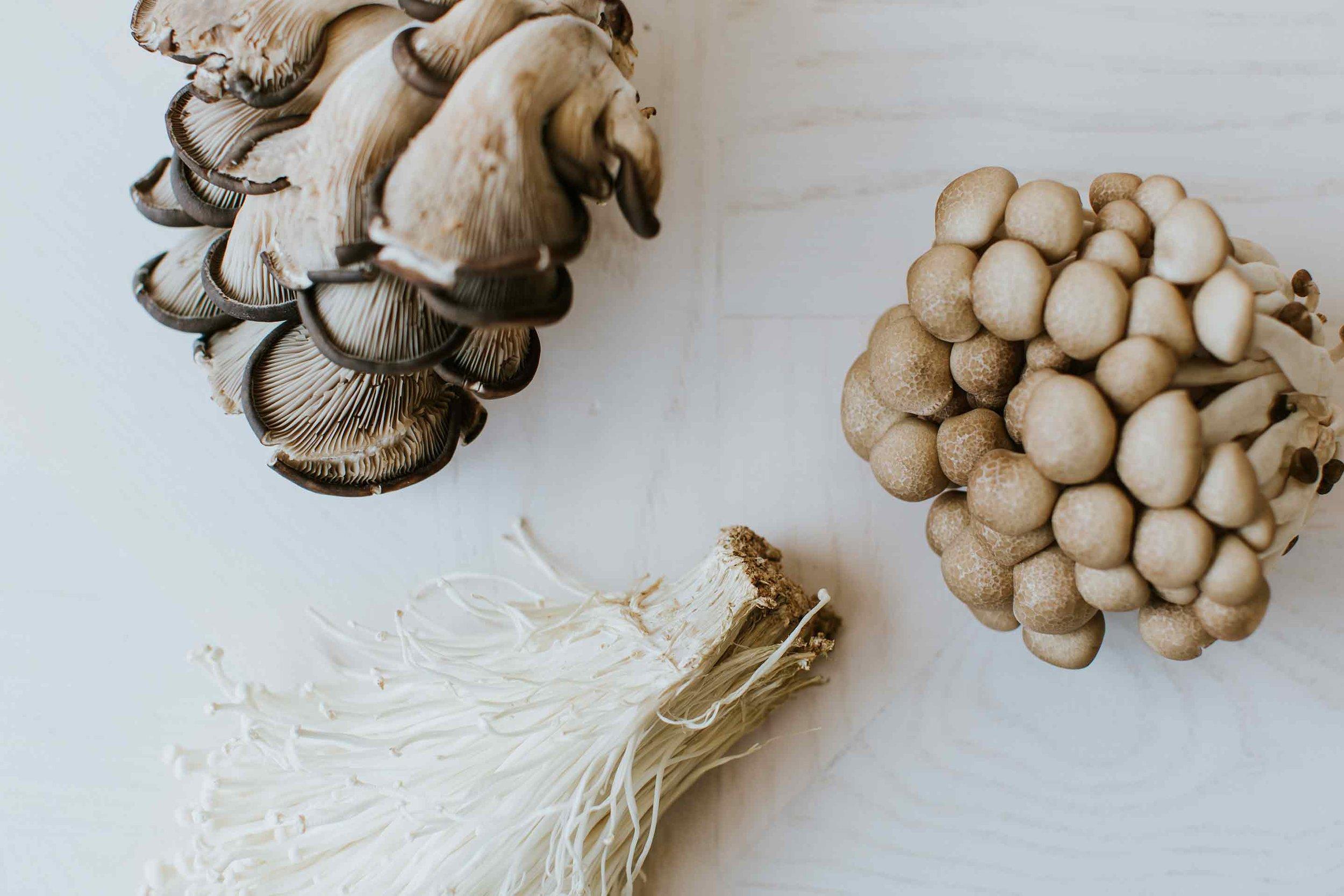 PP5A5948_mushrooms.jpg