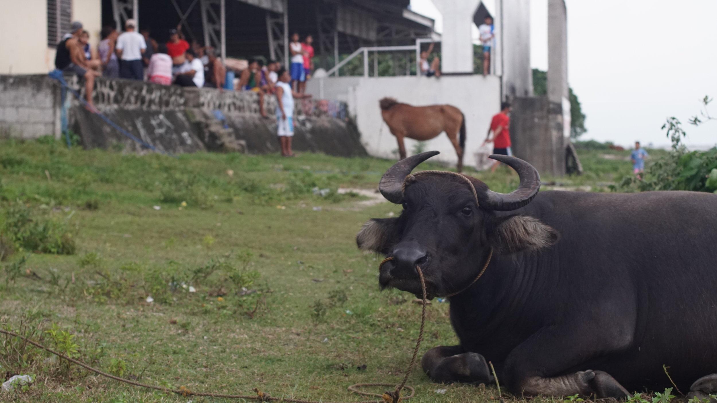 Jala Jala, Philippines