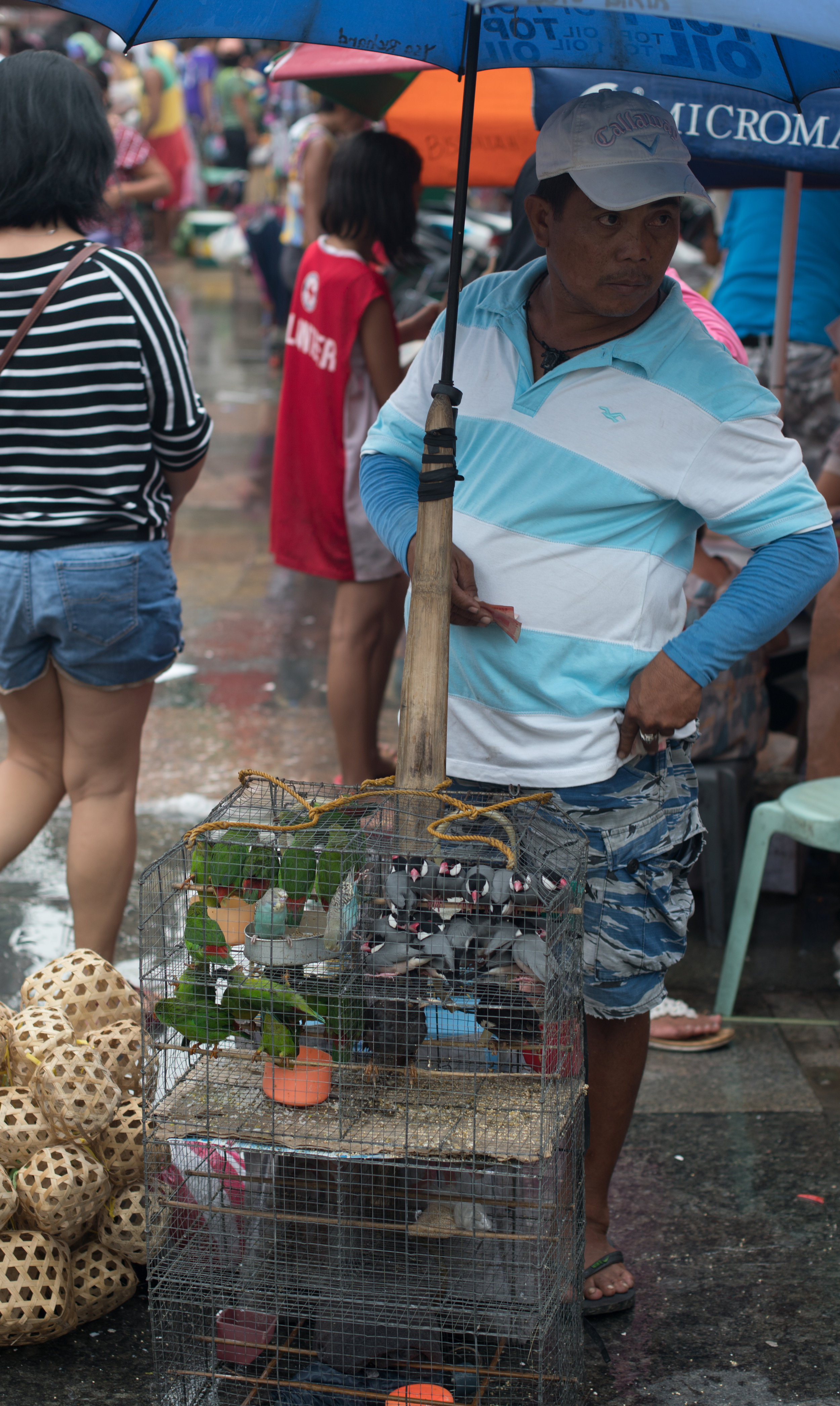 Wandering the Manila Streets: A Man and His Flock
