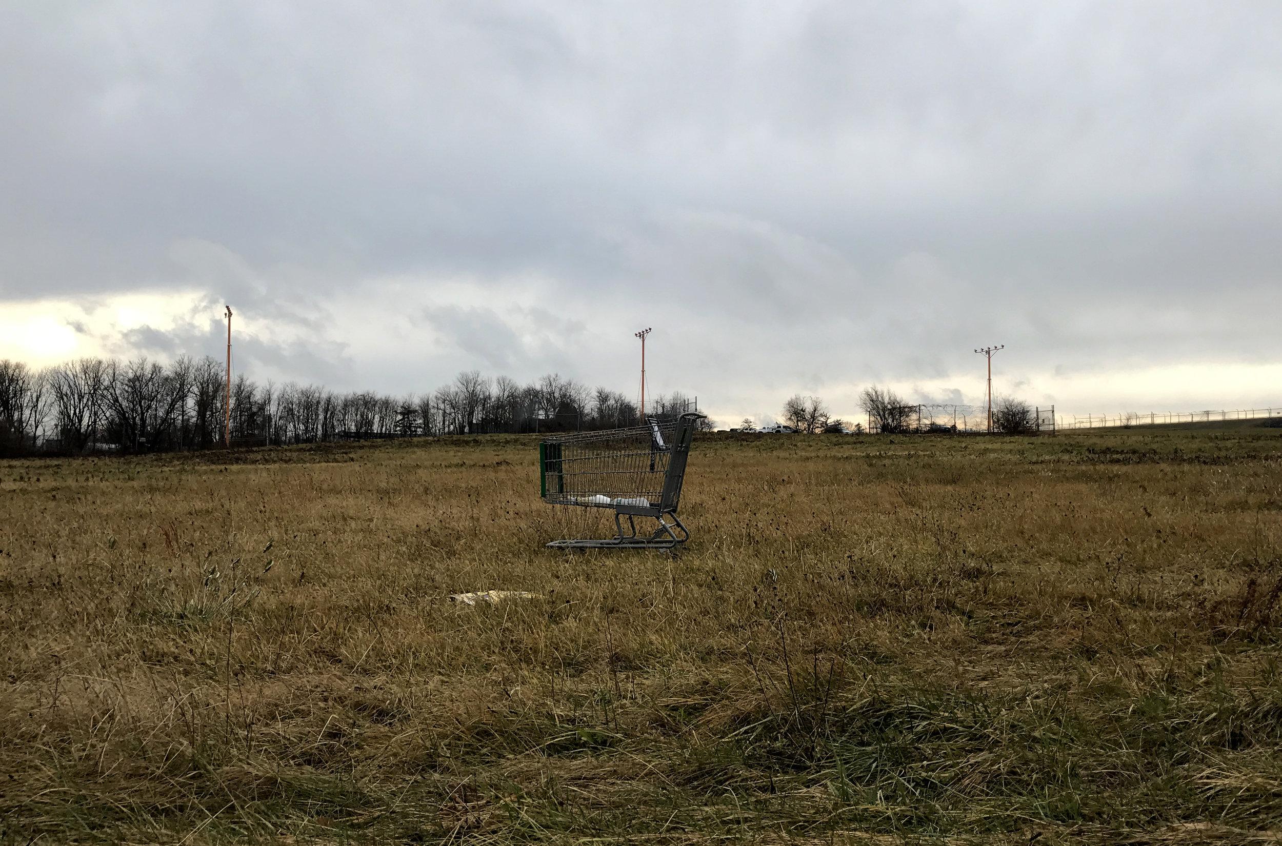Cart AfieldCartina's world, Willow Grove, PA