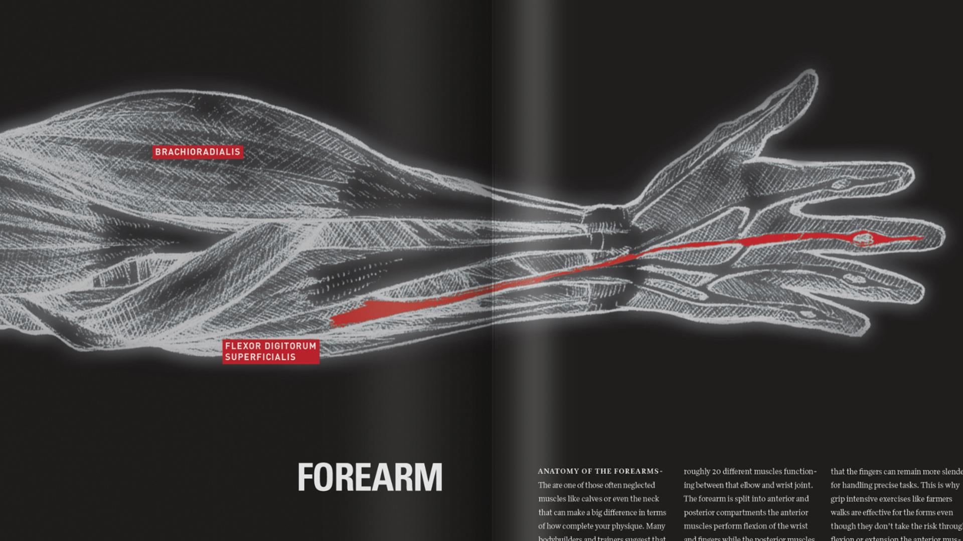 Forearm Closeup.jpg