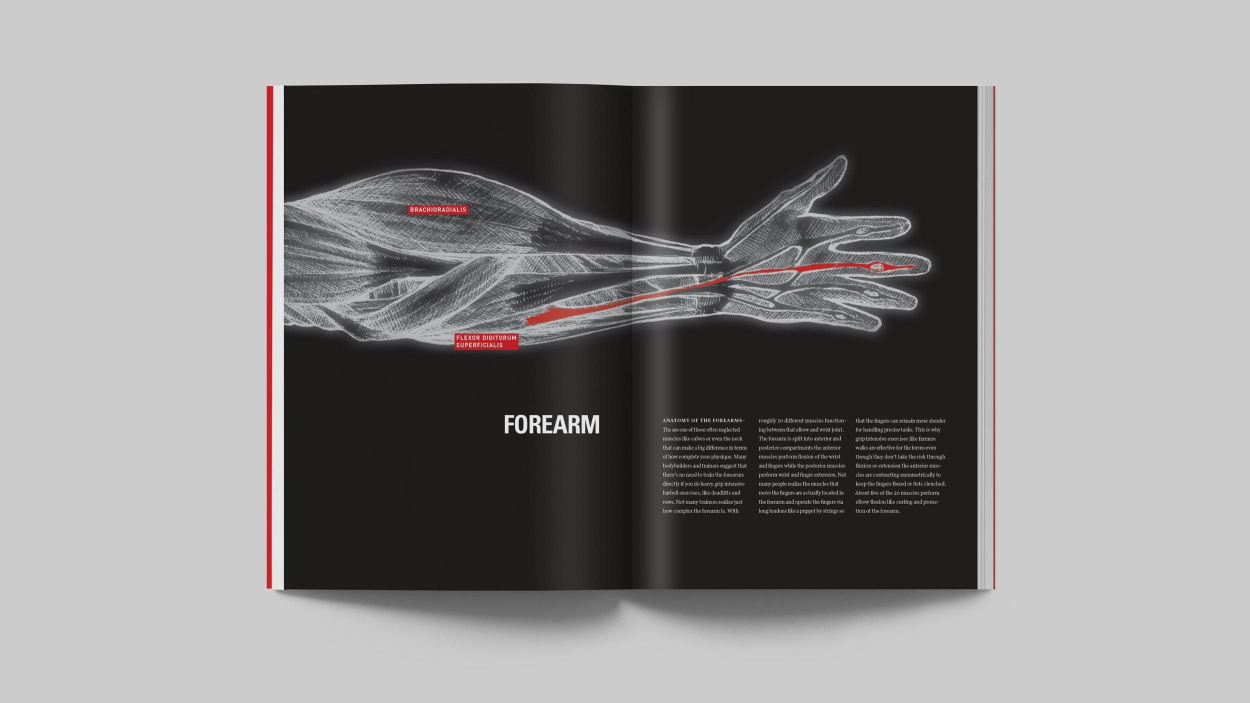 Forearm Spread.jpg