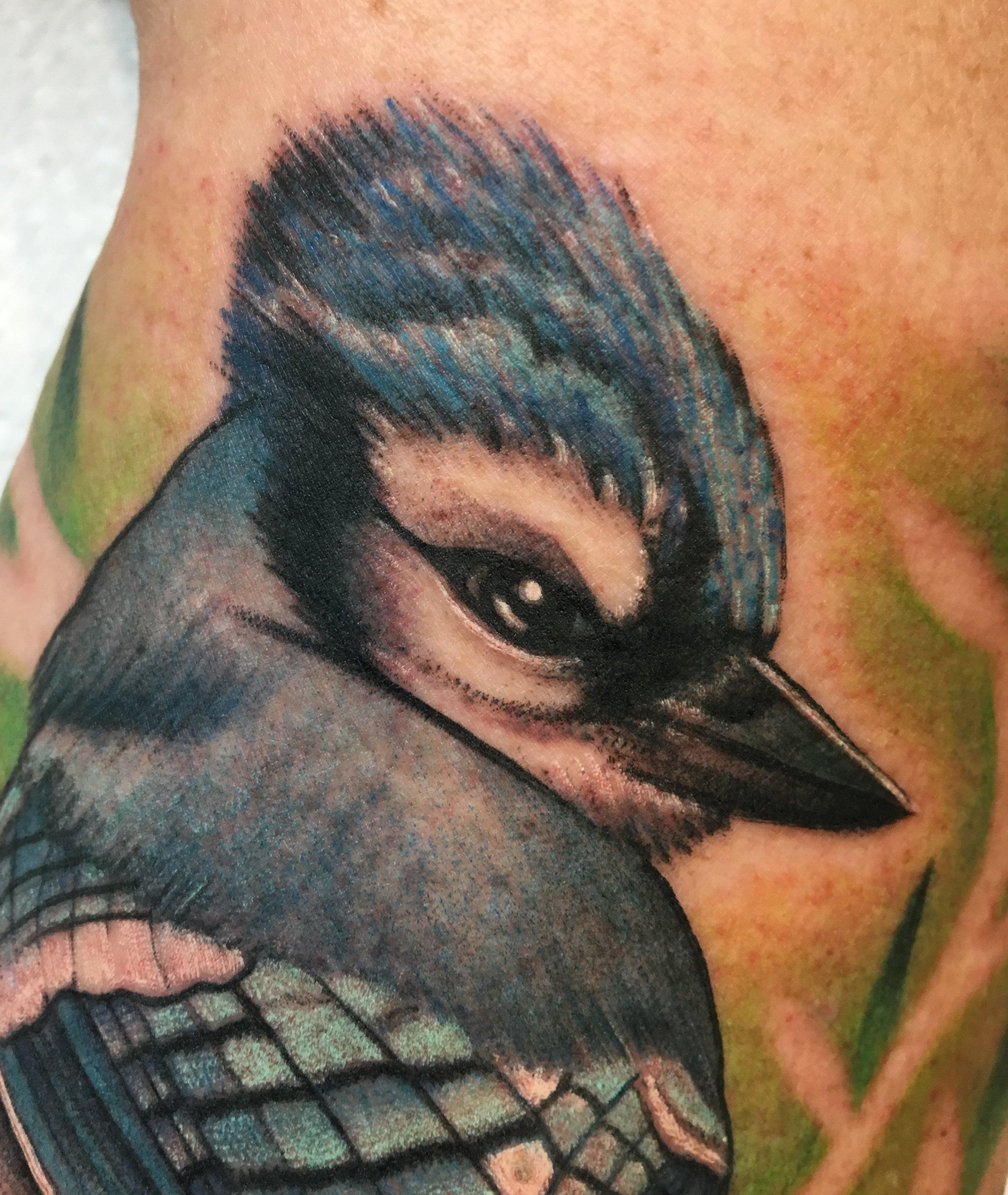 tattoo-blue-jay.jpg