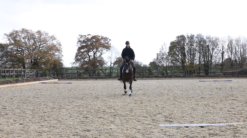 A enter at working trot, proceed down the centre line, tracking left or right -
