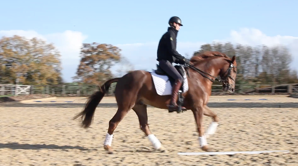 Give and retake the inside rein on a 20 meter circle -