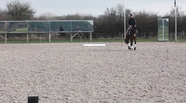 F medium walk,A working canter onto a 15m circle, E 20m circle showing some canter strides -