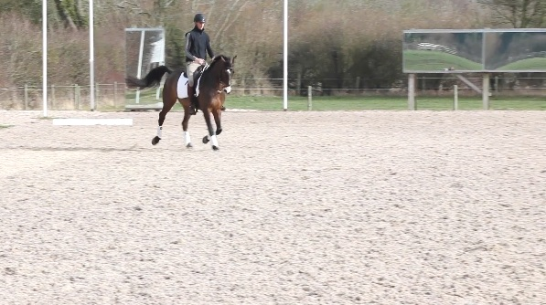 A enter working trot, C 3 loop serpentine to A, medium trot FXH -