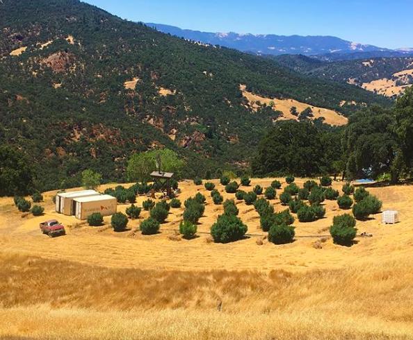 A bird's eye view of WildLand farm taken on August 9th. Link to original photo    here   .