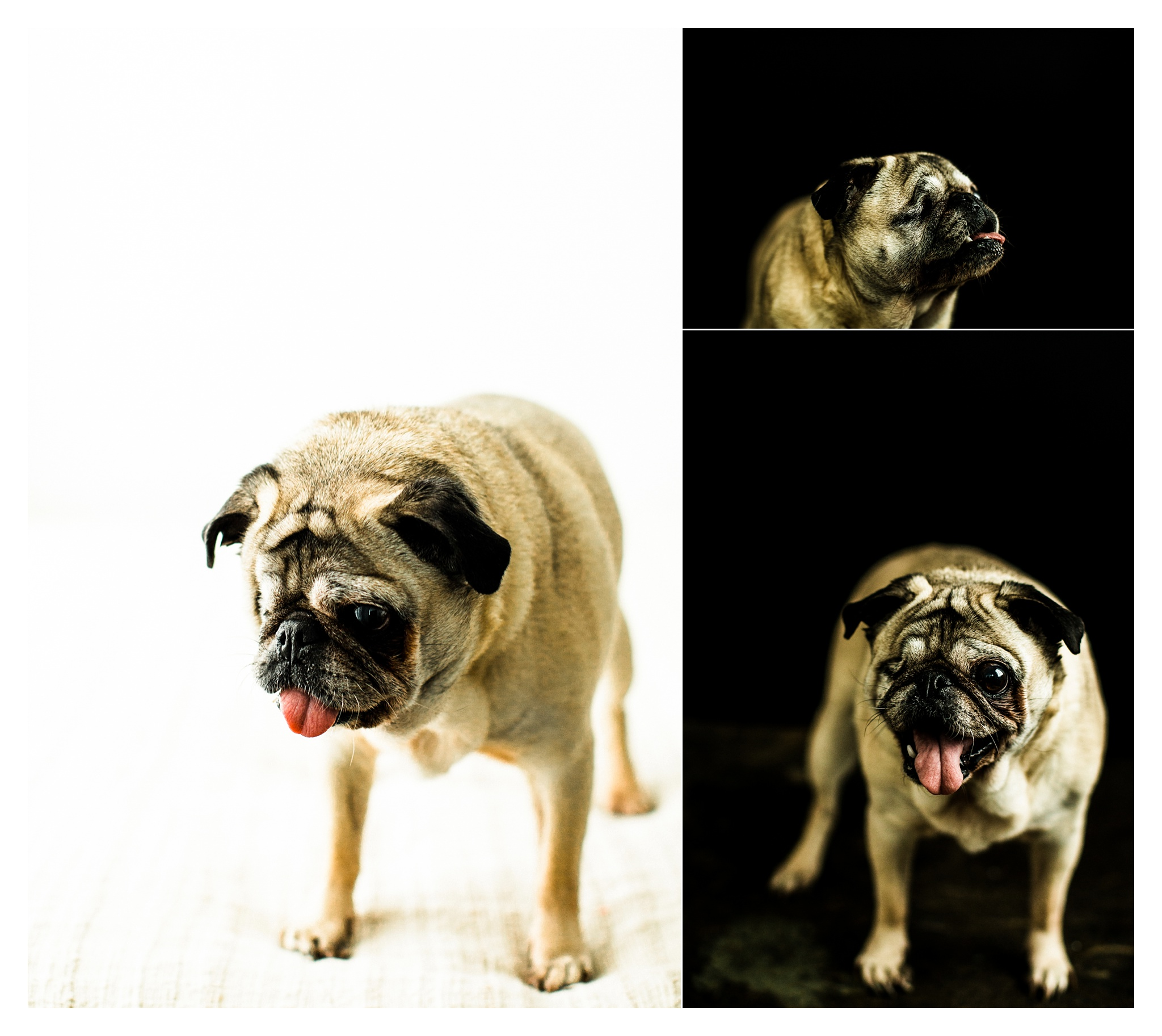 Pet Photography in Portland, Oregon Sommessa_2675.jpg