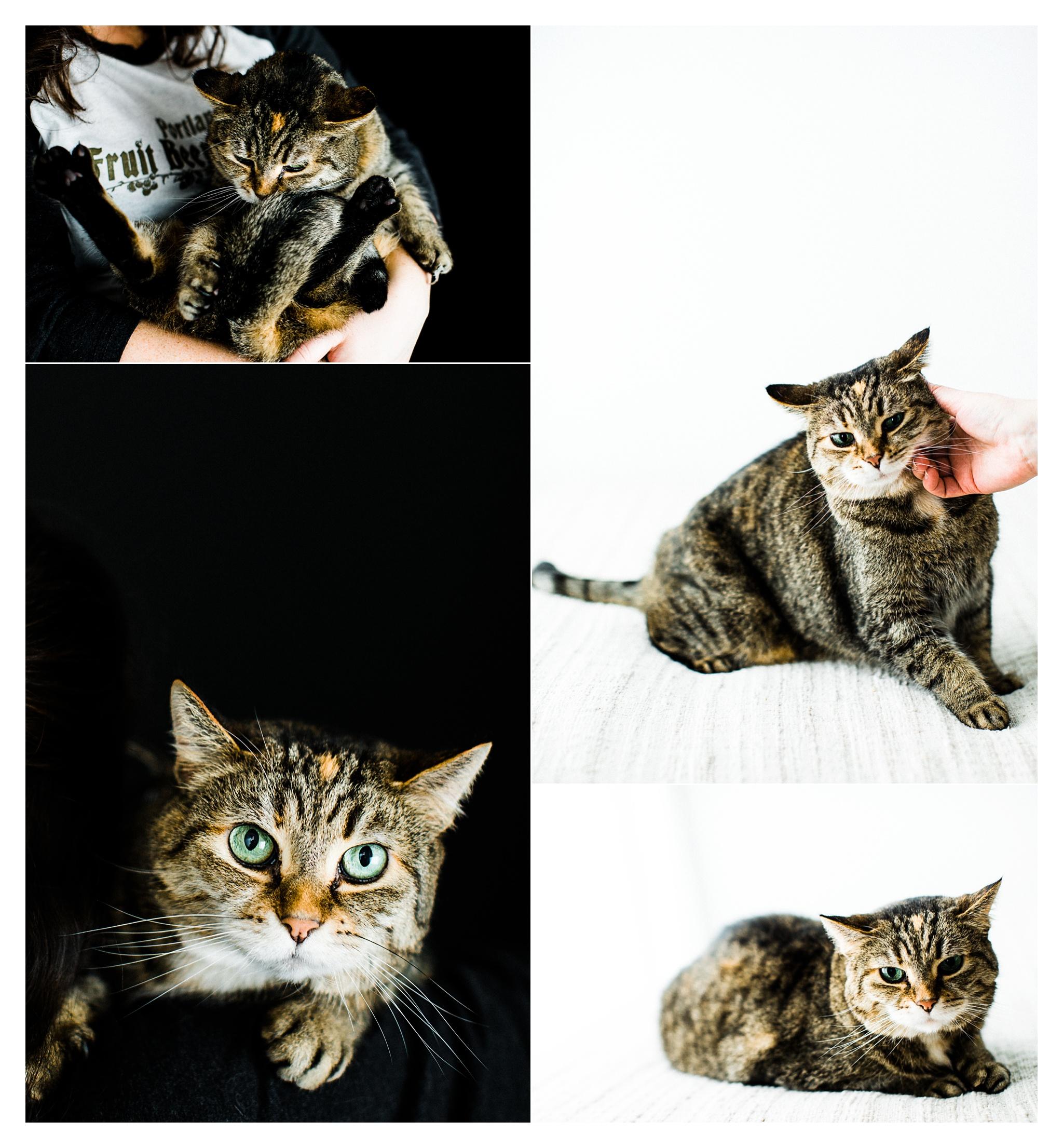 Pet Photography in Portland, Oregon Sommessa_2690.jpg