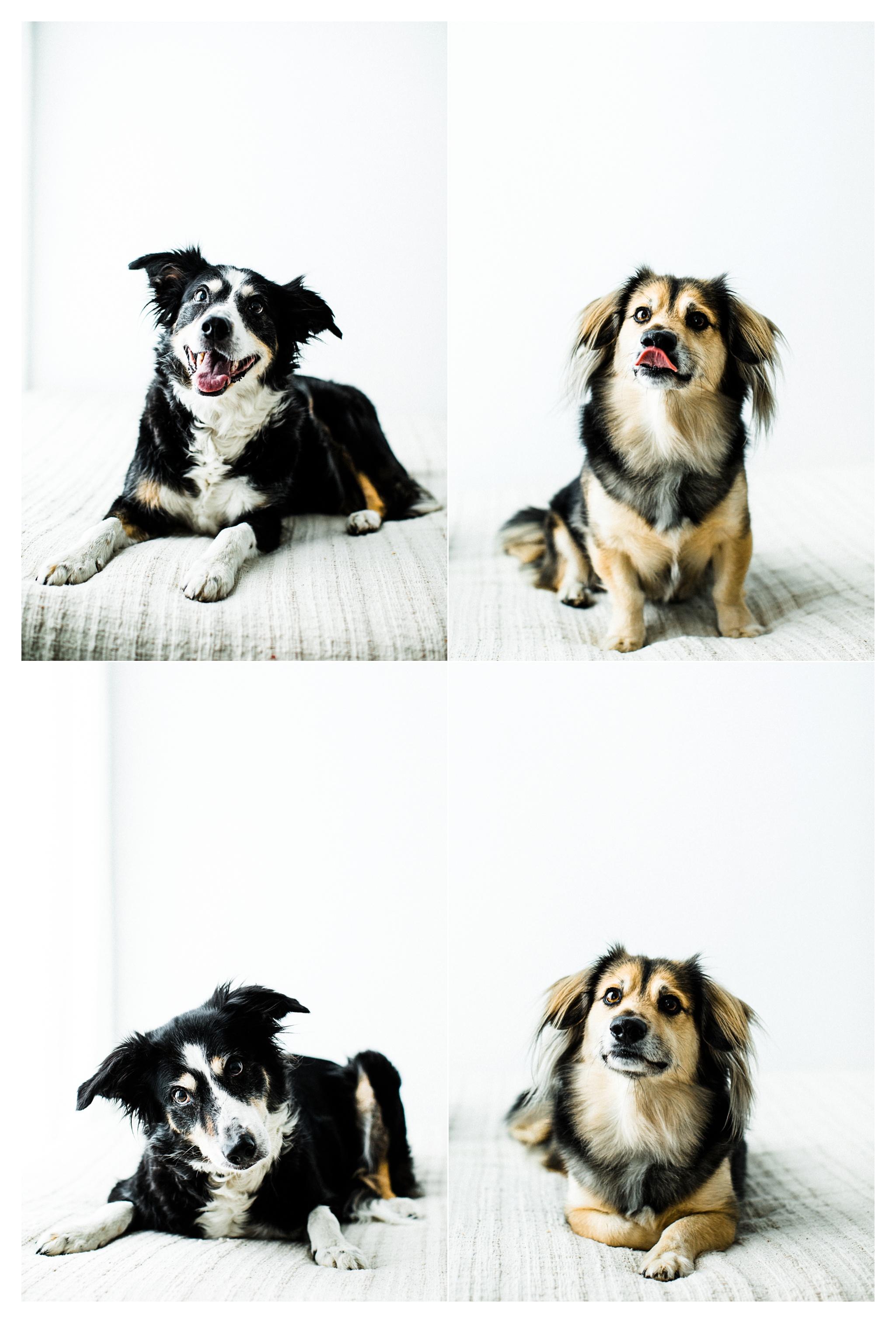 Pet Photography in Portland, Oregon Sommessa_2687.jpg