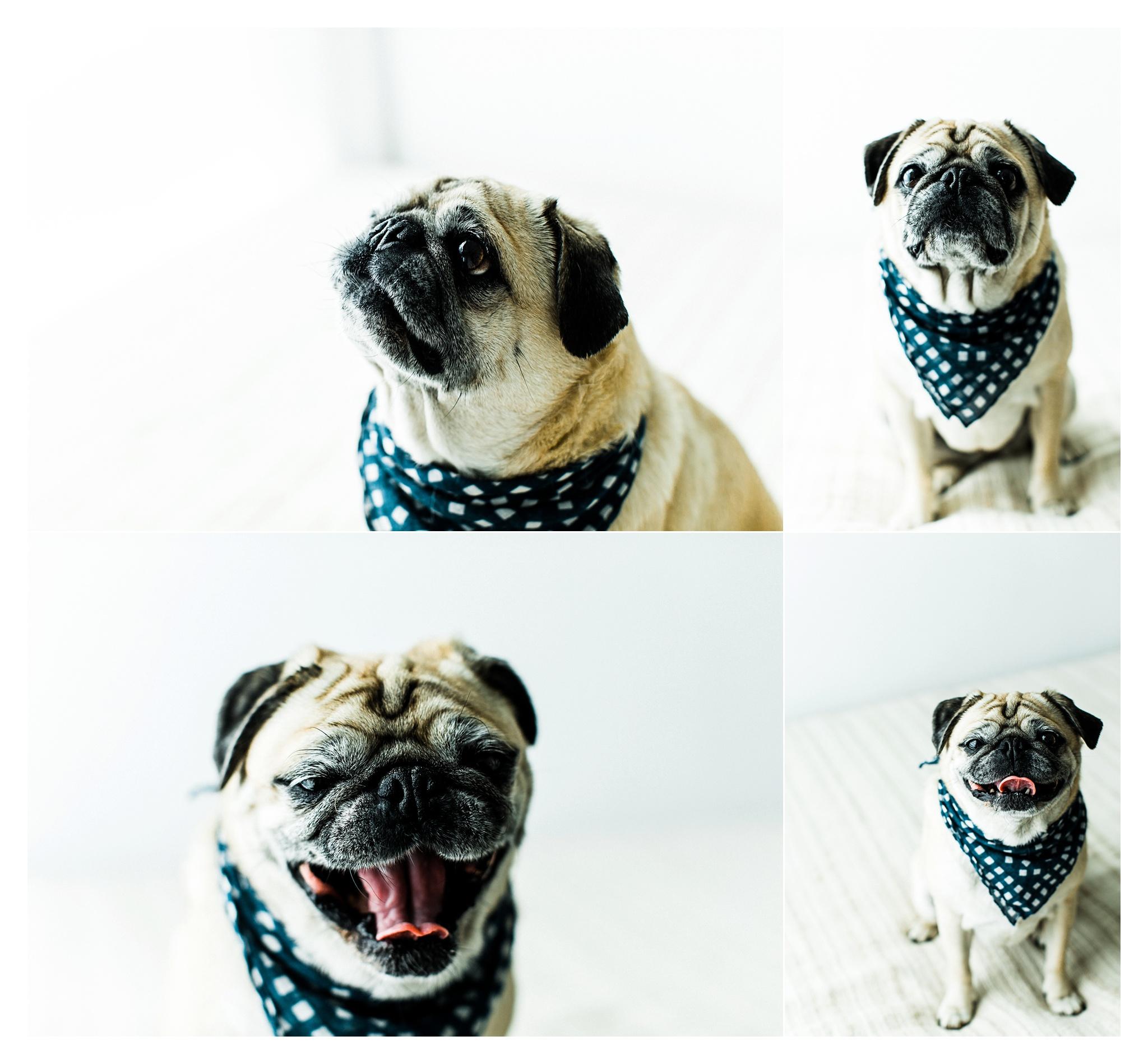 Pet Photography in Portland, Oregon Sommessa_2699.jpg